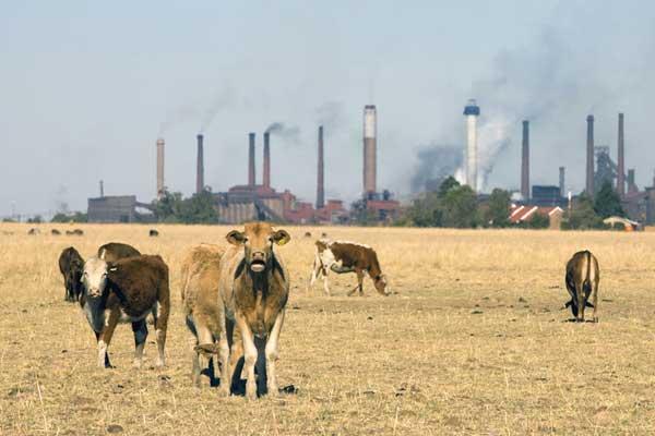 ¡La industria capitalista de la alimentación responsable de la crisis alimentaria y la destrucción medioambiental!